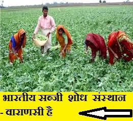 भारतीय-सब्जी-शोध-संस्थान-कहाँ-